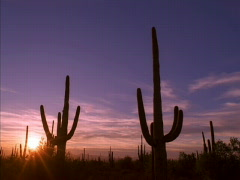 Saguaro Cactus Sunset 640x480 - stock footage