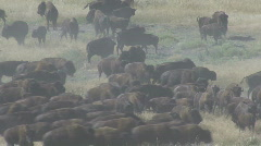 P00733 Bison Herd Running Stock Footage