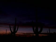 Saguaro Cactus Sunrise 640x480 Stock Footage