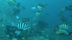 Shark Feeding in Fiji - stock footage
