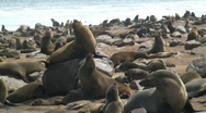 Stock Video Footage of  Seal Colony, Cape Fur Namibia