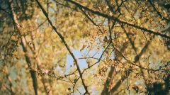 Trees and leaves  Stock Footage