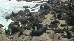 Seal Colony, Cape Fur Namibia - stock footage