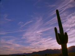 Saguaro Cactus Sunset 640x480 Stock Footage