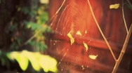 Stock Video Footage of spider web