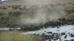 wildebeests crossing mara river. - stock footage
