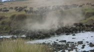 Stock Video Footage of wildebeests crossing mara river.
