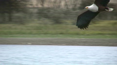 Eagle catching a fish 2 Stock Footage