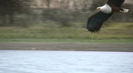 Stock Video Footage of eagle catching a fish 2