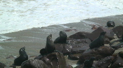 Seal Colony, Cape Fur Namibia Stock Footage