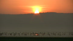 -Sunset with flamingos Stock Footage