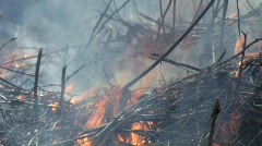 Smoking bushfire Stock Footage