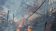 Stock Video Footage of Bushfire burning in a shrubland. Twigs and grasses crumple in the flames.