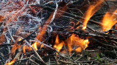 Bushfire burning in a shrubland in spring Stock Footage