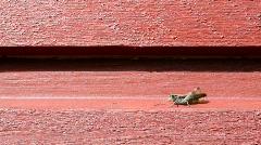 Grasshopper walks along a wooden wall Stock Footage