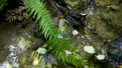Creek in autumn: water gurgles over fern and leaves Stock Footage