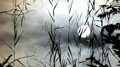 Rushes and the sun are reflected in the calm waters of a lake. Stock Footage