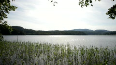 The wind plays with rushes and send ripples over a Swedish lake. Stock Footage