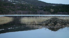 Beaver's lodge on the shore of a lake in Sweden.  - stock footage