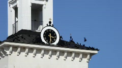 Jackdaws resting on a steeple Stock Footage
