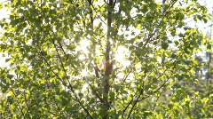 A birch tree moves with the wind, sun glitters on the water of a lake. Stock Footage