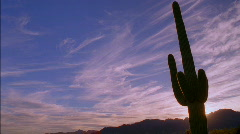 Saguaro Cactus Sunset HD - stock footage