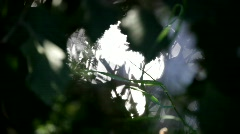 Blades of grass moving with a summer breeze Stock Footage