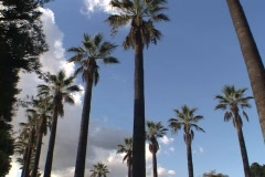 Palm trees rise toward a blue sky in Southern California. Stock Footage