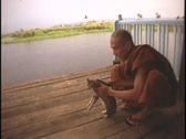A Buddhist monk teaches a cat to hurdle his hands. Stock Footage