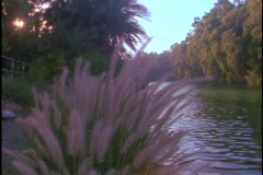 The Jordan river flows between trees and shrubs. Stock Footage