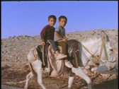 Young  Arab boys ride on a donkey. Stock Footage