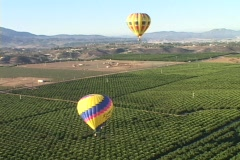 Hot air balloons fly over vineyards and wineries. Stock Footage