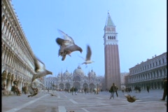 Pigeons fly around St. Mark's Square in Venice, Italy. Stock Footage