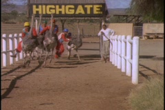 Men in hard hats and orange jumpsuits race on ostriches. - stock footage