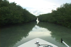 A boat cruises through a narrow canal surrounded by trees. Stock Footage