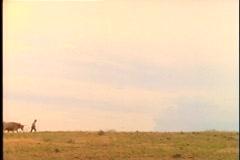 Pioneerit kävellä karjan ja katetuissa vaunuissa koko preerialla. Arkistovideo