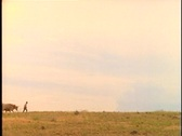 Pioneers walk with livestock and covered wagons across a prairie. Stock Footage