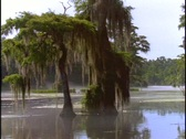 Trees adorn a swamp in Florida's Everglades. Stock Footage