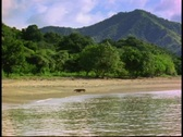 A Komodo Dragon walks along the edge of the water on a sandy beach. Stock Footage