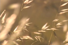 Strands of brush blow in the wind. Stock Footage