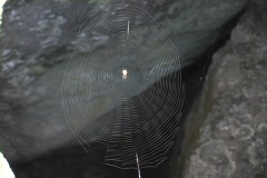 A thin spider web glistens between two rocks. - stock footage