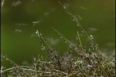 A new hatch of mosquitoes swarms the grasses. Stock Footage