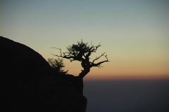 A lone tree grows on the side of a mountain silhouetted by the sunset. Stock Footage