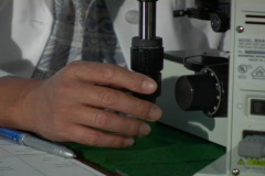 A man in a white coat adjusts a knob on a microscope. Stock Footage