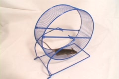 Medium shot of a mouse run in a wheel. Stock Footage