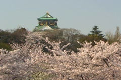 Masses of cherry blossoms add color to a temple in the background. Stock Footage