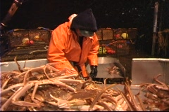 Three men work together to sort crabs into different bins. Stock Footage