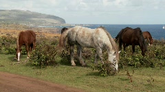 Horses graze on Easter Island with the town of Hanga Roa Stock Footage