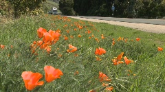 TRucks and cars pass on a California poppy lined highway. Stock Footage