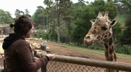 A woman feeds a giraffe. Stock Footage